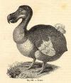 dodo1_small1