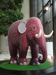 Coutts Elephant
