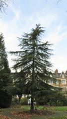 Lonsdale Square-2