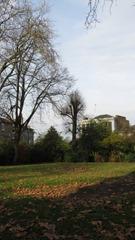Thornhill Road Garden-1